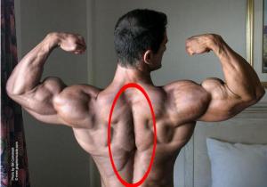 脊柱起立筋のイメージ