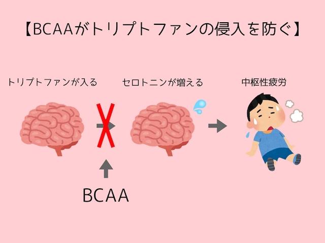 BCAAがトリプトファンの侵入を防ぐ