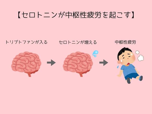 セロトニンが中枢性疲労を起こす