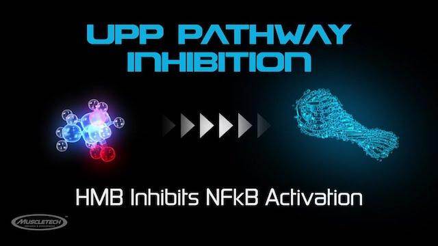 HMBは筋分解を抑制する