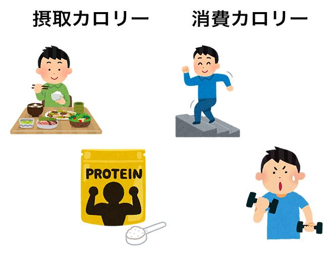 摂取カロリーと消費カロリーの違い