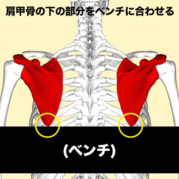 ベンチの縁に、肩甲骨の下角を合わせる