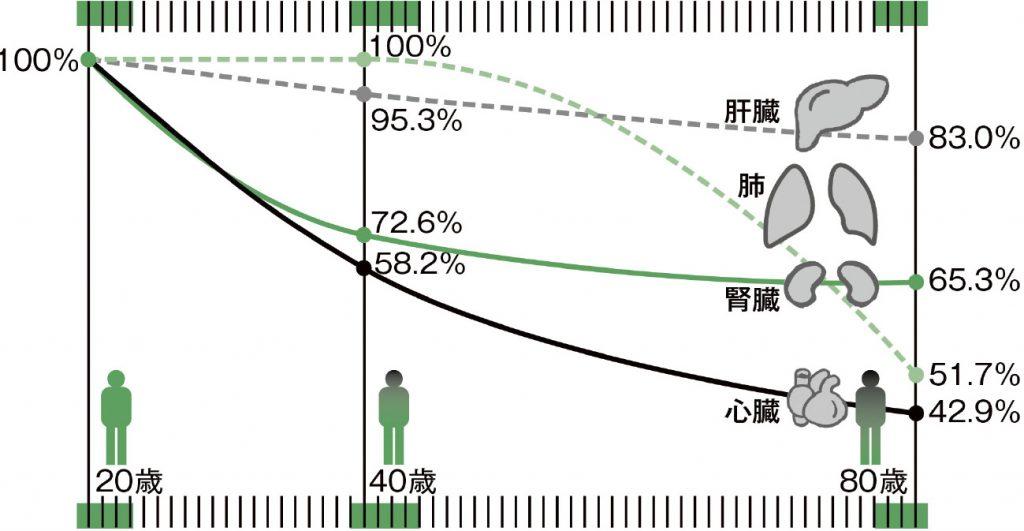 加齢とともにコエンザイムQ10は減少する